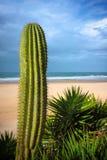 海滩仙人掌 库存照片