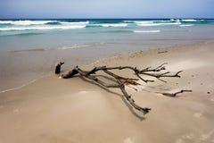 海滩停止的结构树 免版税库存照片