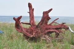 海滩前面足迹- 2015年5月18日 免版税库存图片