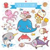 海洋动物汇集。 免版税库存图片