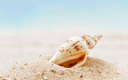海滩含沙壳 免版税库存照片