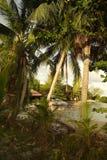 海滩和可可椰子树在泰国 库存照片