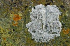 海藻和地衣在石头 免版税库存图片