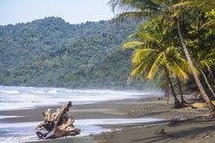 海滩和密林在哥斯达黎加 图库摄影