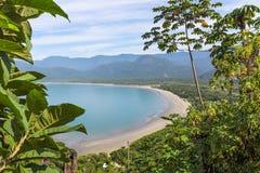 海滩和植被 库存图片