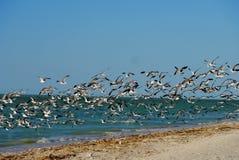 海滩和海洋全景在有鸟的墨西哥 库存图片