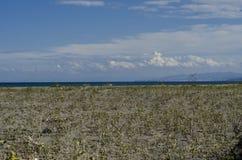 海滩和黑海,萨姆松海边市,土耳其 库存图片