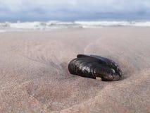 海滩在与美好的壳的11月 库存图片