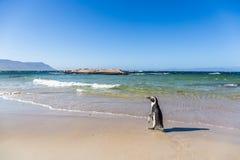 海滩在开普敦,南非 库存图片
