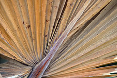 海滩在您的手棕榈  免版税库存照片