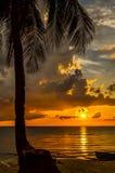 海滩在日落的椰子树 免版税库存照片