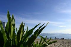 海滩在早晨阳光下 库存照片