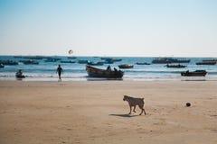 海滩在果阿 免版税库存图片
