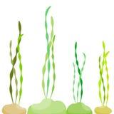 海藻在海 免版税库存图片