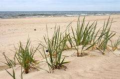 海滩在海 免版税库存照片