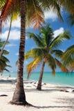 海滩在热带 Isla Saona,拉罗马纳,多米尼加 免版税图库摄影
