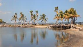 海滩在迈阿密,佛罗里达 股票视频