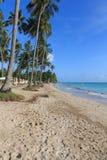 海滩在Maragogi, Alagoas -巴西 库存图片