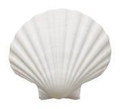 海洋壳 免版税库存照片
