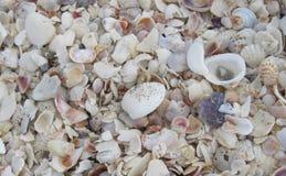 海滩壳 库存照片