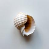 海洋壳 库存图片