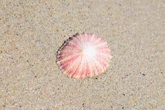 海滩壳 免版税库存图片