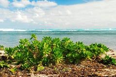 海滩多汁植物和蓝绿色波浪 库存照片