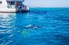 海洋娱乐在埃及 潜水在珊瑚礁 库存图片