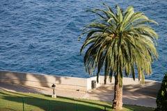 从海洋学者蒙地卡罗和一棵伟大的棕榈的看法 免版税库存照片