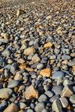 海滩小卵石- Salika野生生物储备 免版税图库摄影