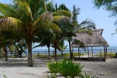 海滩庭院假日夏天墨西哥棕榈 免版税库存照片
