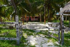 海滩庭院假日夏天墨西哥棕榈 库存图片
