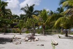 海滩庭院假日夏天墨西哥棕榈 库存照片