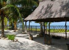 海滩庭院假日夏天墨西哥棕榈 图库摄影