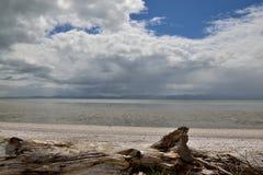 海滩新西兰 免版税库存图片