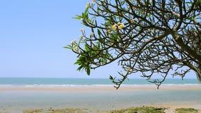 海滩旁边树 免版税库存图片