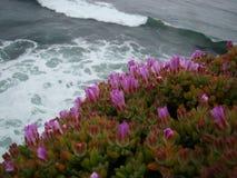 海洋旁边桃红色花 免版税库存图片