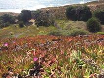 海滩旁边森林在旧金山 免版税库存图片