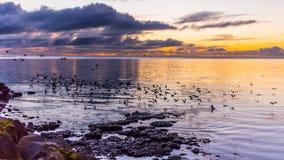 海洋日出和鸟 库存图片