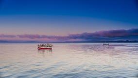 海洋日出和鸟 免版税库存照片