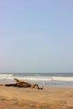 海滩日志下午 免版税库存照片