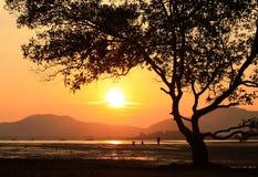 海滩日落或日出与热带树 免版税库存照片