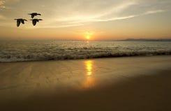 海洋日落鸟剪影 免版税库存照片