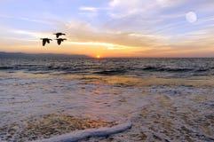 海洋日落鸟剪影 库存图片