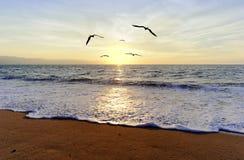 海洋日落鸟 图库摄影