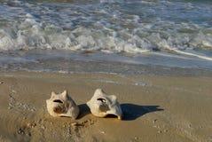 海滩时间海壳 库存图片