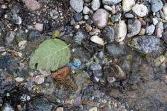 海滩晃动绿色叶子浮动海洋水 免版税库存照片