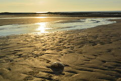 海滩有美丽的金黄沙子 免版税库存照片