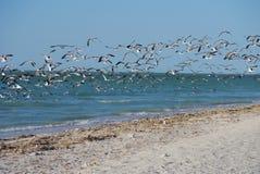 海洋有鸥和海鸟的海全景墨西哥 免版税库存图片