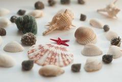 海洋构成 红色星形 免版税图库摄影
